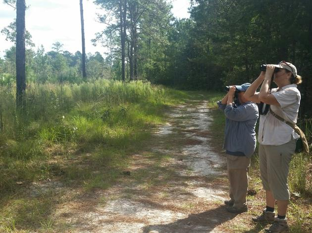 Birding: Hobby or Tool for Conservation?