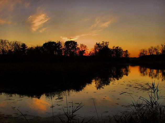 Audubon Florida Decries Florida's Challenge of Wetland Protections