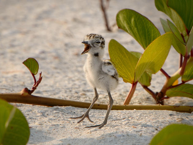 Only in Florida: Investors Promised Permit to Destroy Bird Habitat on Public Land
