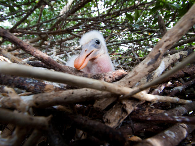 Audubon Advocates Keep Pressure on the Army Corps to Protect the Southern Everglades