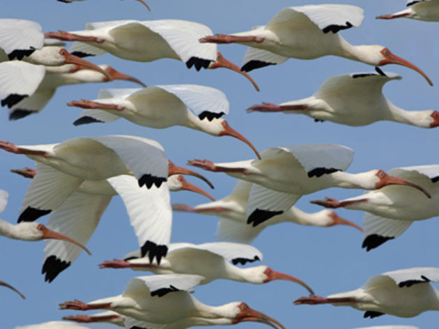 Audubon Cheers U.S. House Approval of EAA Reservoir Project in America's Water Infrastructure Act of 2018