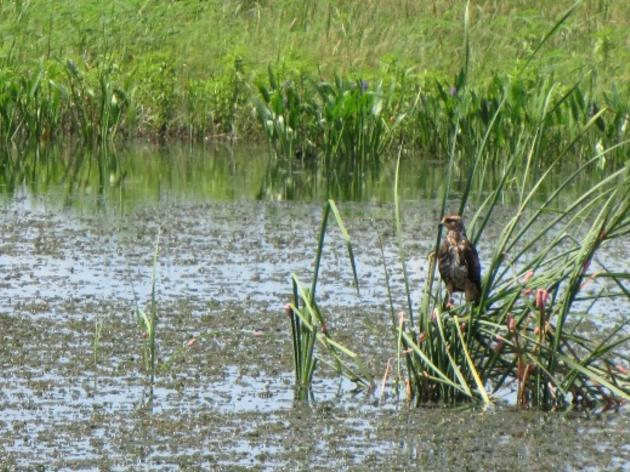The Everglades Agricultural Area Reservoir Project: An Urgent Call to Action
