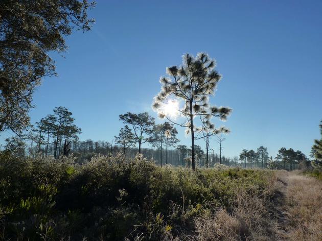 History of Serenova Preserve