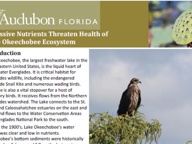 Excessive Nutrients Threaten Health of Lake Okeechobee Ecosystem