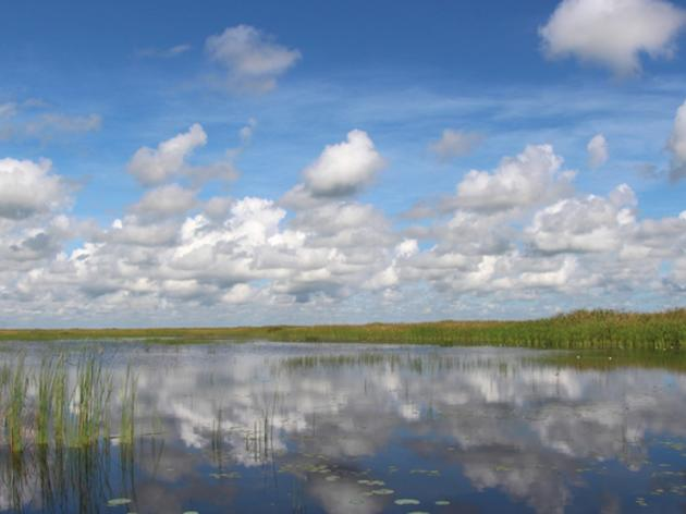 Audubon's Eric Draper Calls Sen. Lizbeth Benacquisto's Request for State Agencies to Plan for Water Storage South of Lake Okeechobee a Helpful Step to Reduce Discharges