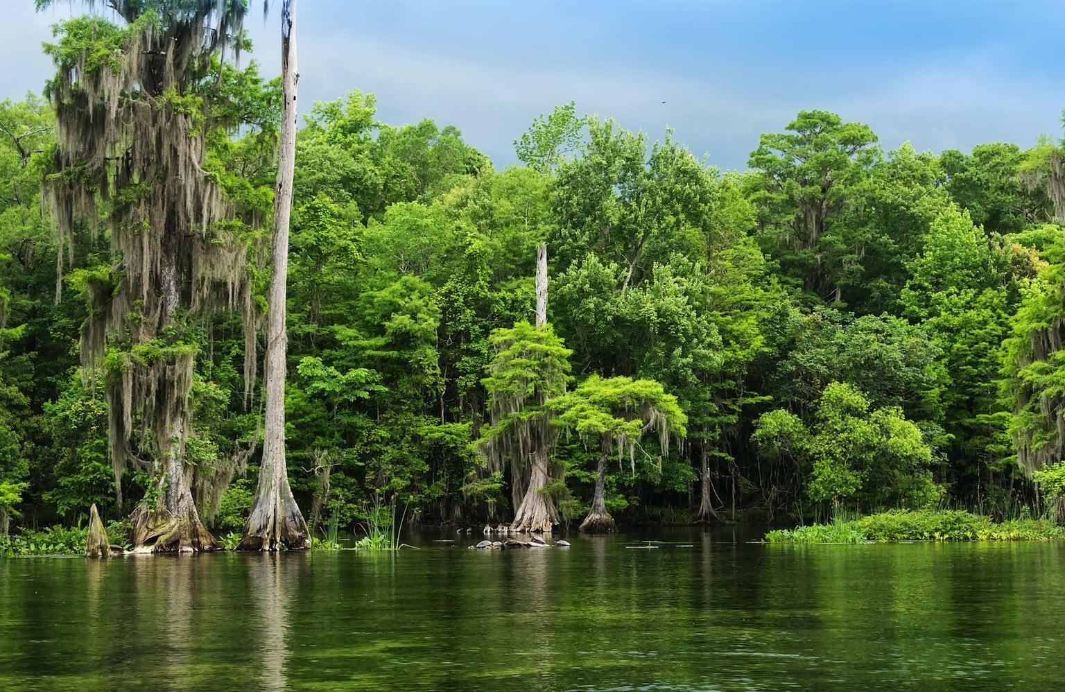 Wakulla Springs State Park | Photo: Adobe Stock