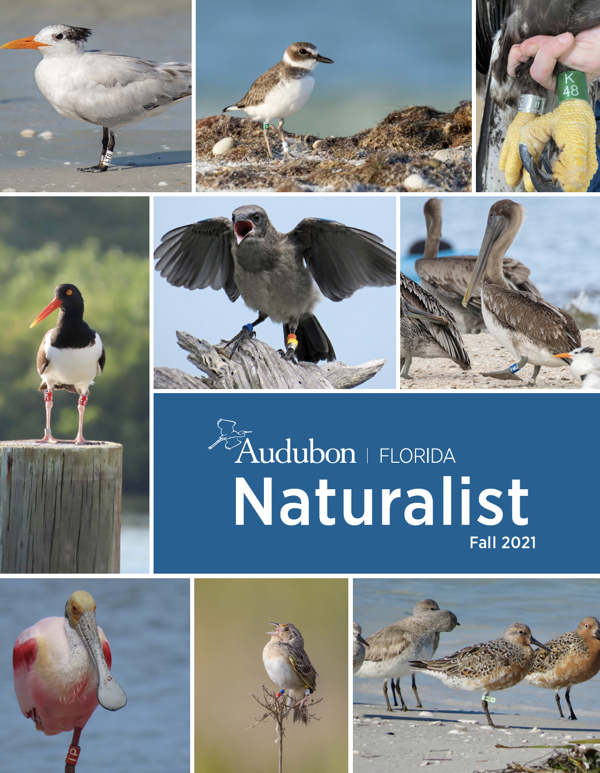 Cover photo of the Fall Naturalist, with multiple photos of banded birds.