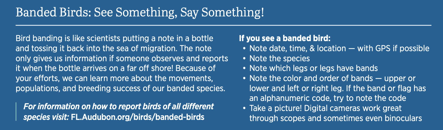 Image describing what someone should do if they see a banded bird. For more information about how to report banded birds, check out https://fl.audubon.org/birds/banded-birds