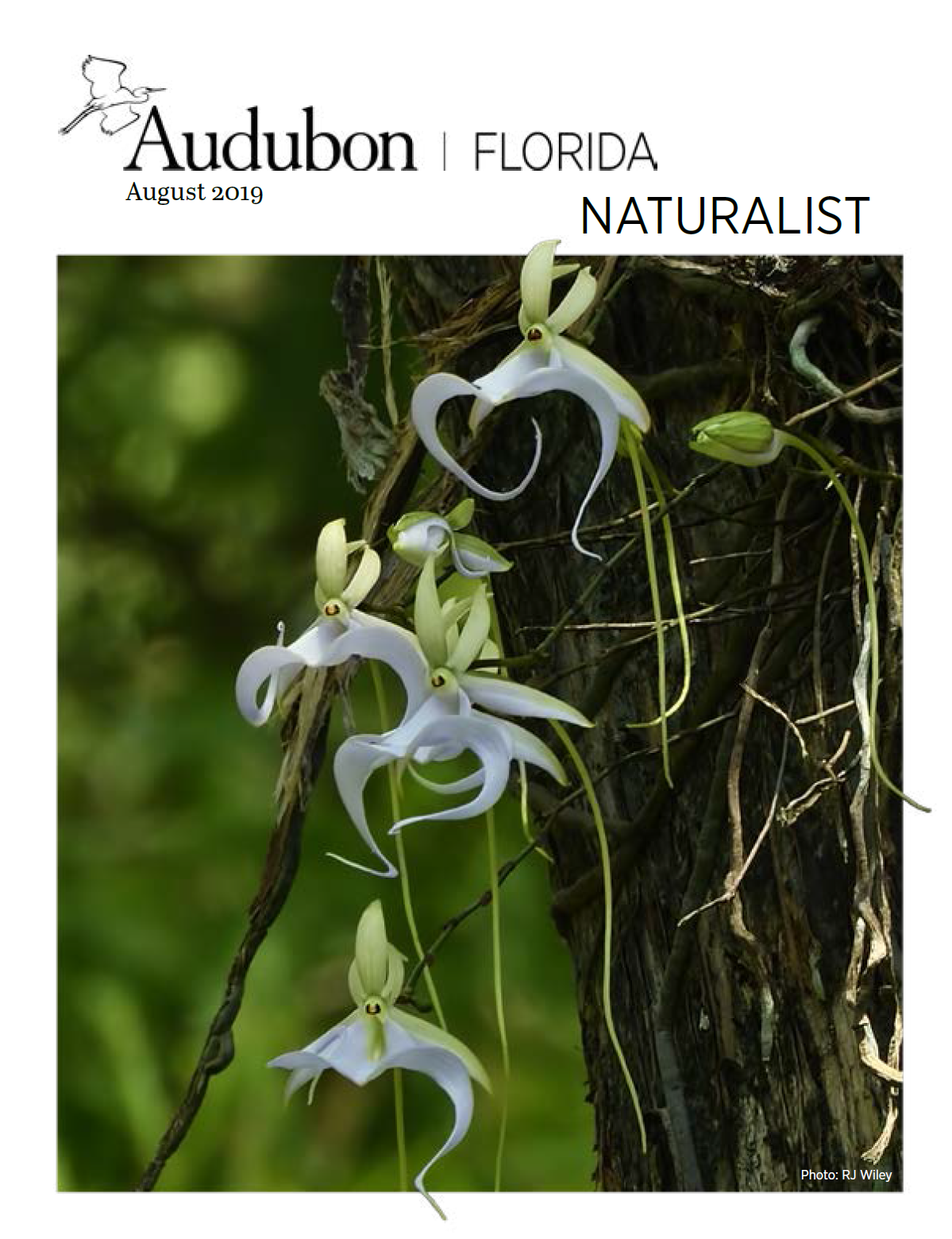 Photo of the cover of the August Issue of the Naturalist