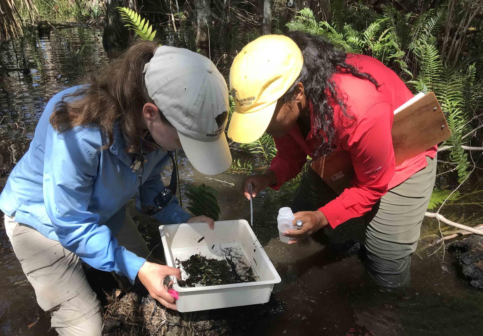 audubon conservation interns