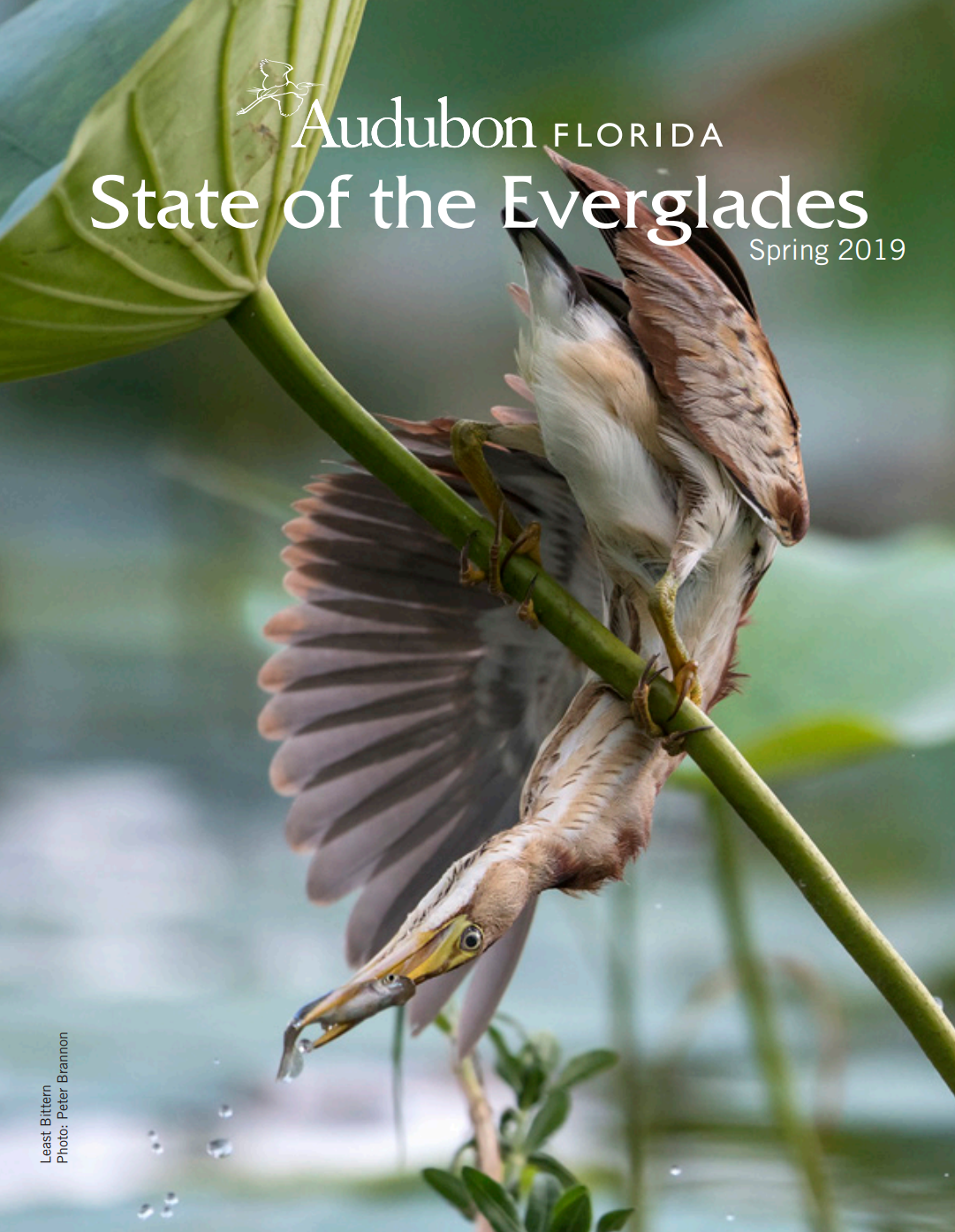 State of the Everglades Spring 2019 cover