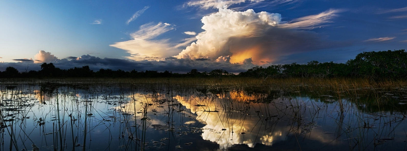 Storm clouds over the Everglades.