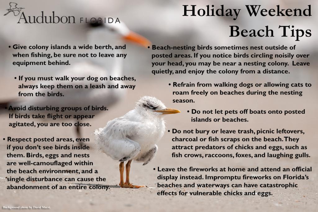 Beach Tips for Memorial Day 2014 | Audubon Florida
