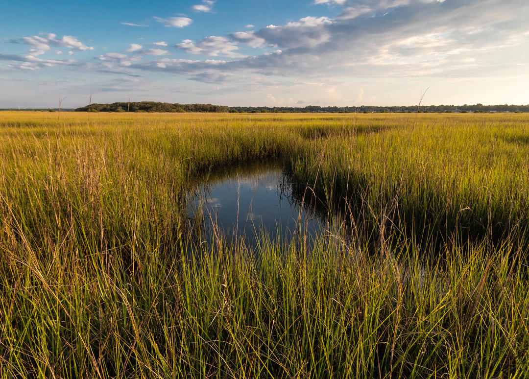 The marsh on Fish Island glows in golden light.