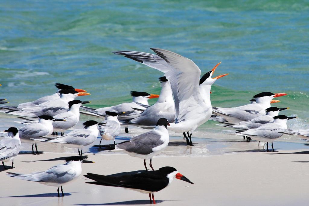 Seabirds. Photo: JulieAnn Schultz/Audubon Photography Awards.