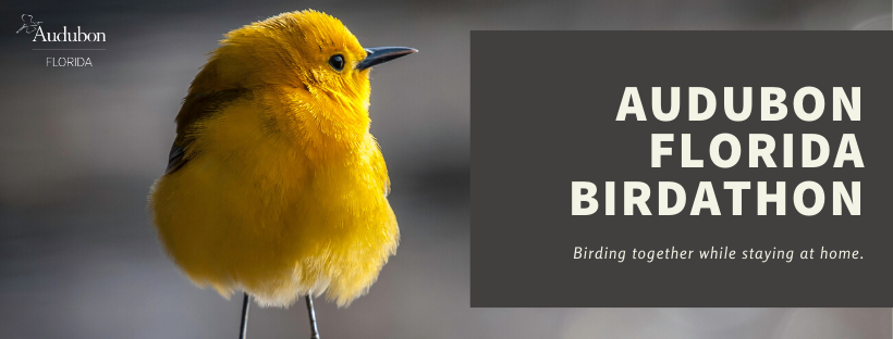 Prothonotary Warbler. Photo: Tom Reichert.
