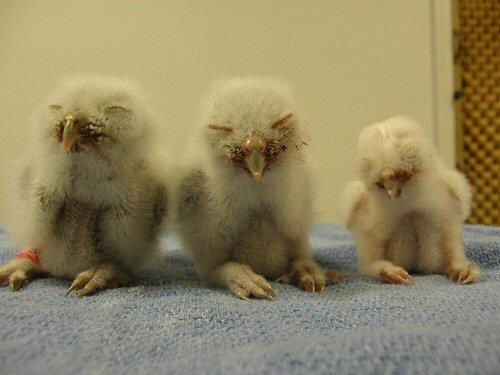 Marvelous Audubon Florida   National Audubon Society