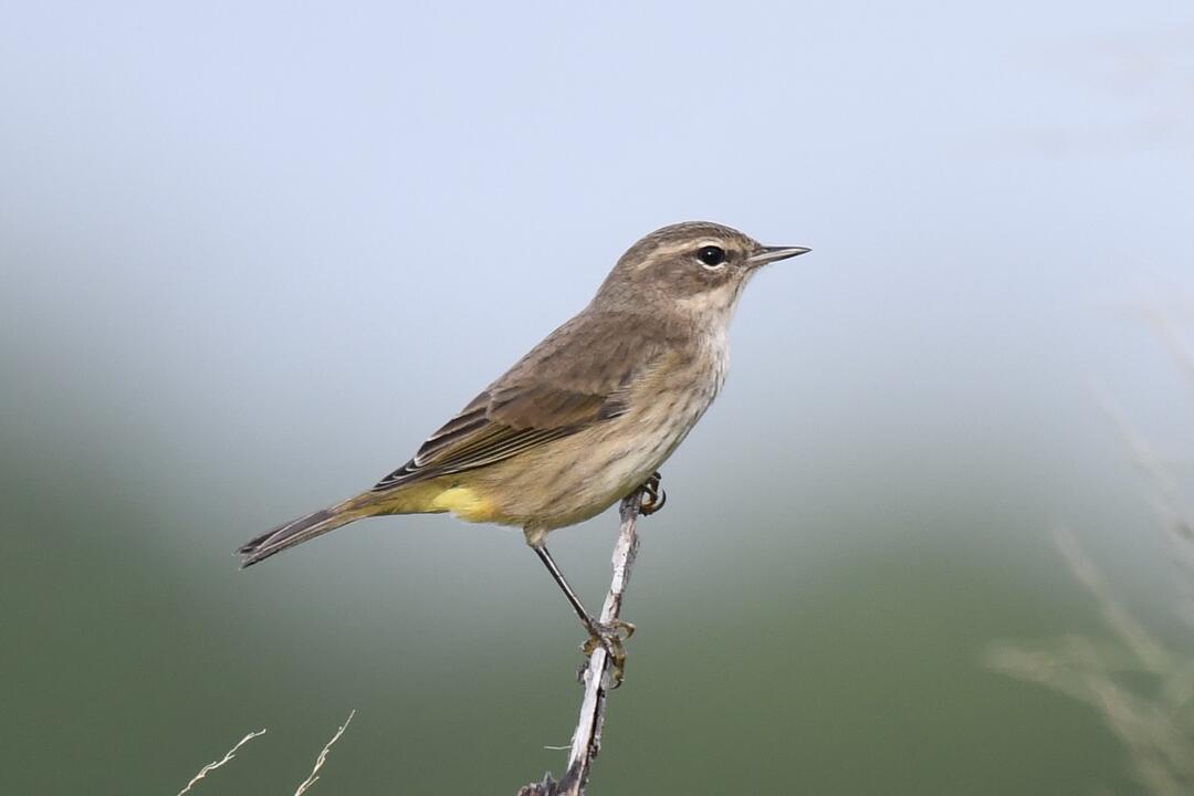 Sandhill Crane. Photo: Elizabeth Acevedo/Audubon Photography Awards