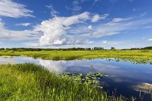 Audubon Celebrates Record-High President's Everglades Budget Recommendation