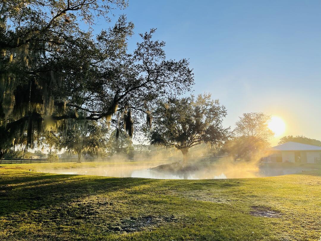 Morning mist rises on a Florida farm. Photo: sumozmom/Pixabay.