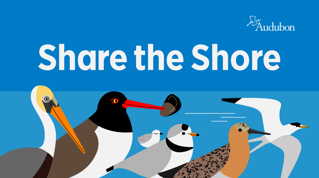 Share the Shore